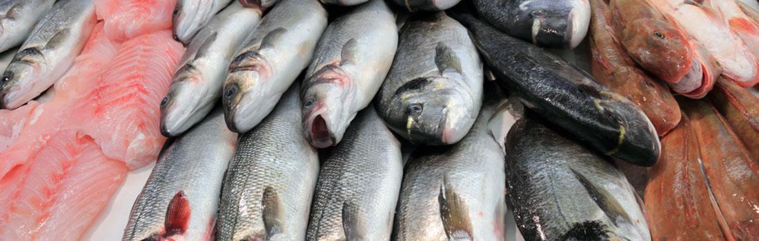 Cinco puntos claves para determinar si tu pescado está fresco
