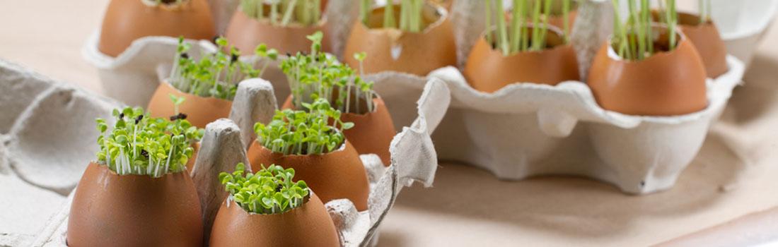 Cáscaras de huevo y 7 usos excepcionales fuera de la cocina