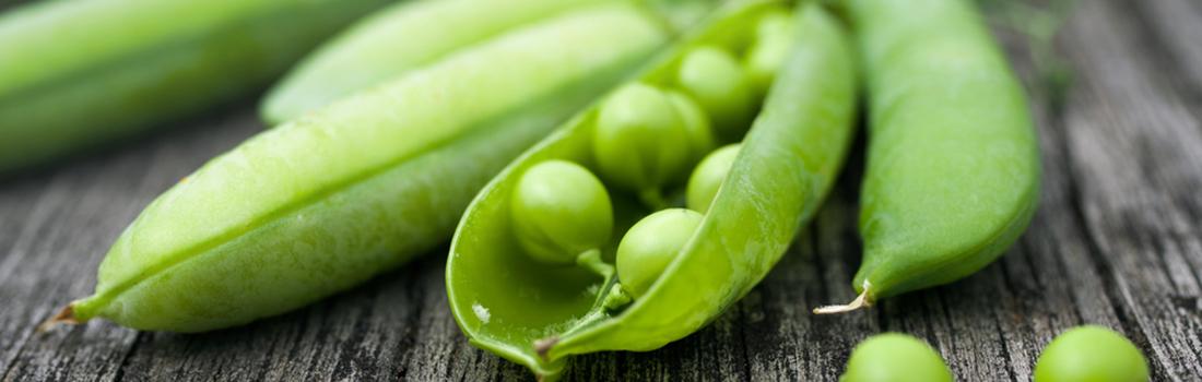 Chícharo, poderosa y versátil leguminosa ¡Conoce sus beneficios!