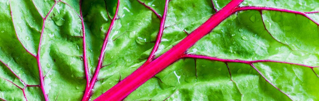 Tallos y hojas de las verduras que debes guardar!