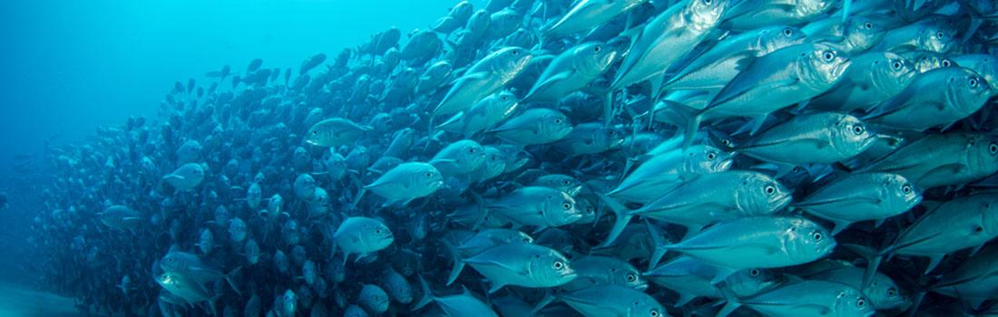 Microplástico en pescados y mariscos ya no se puede controlar